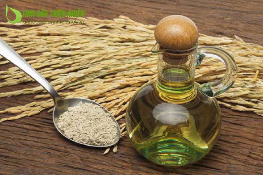 Công dụng của dầu cám gạo